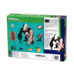 Thames & Kosmos -GORILLA ANATOMY MODEL