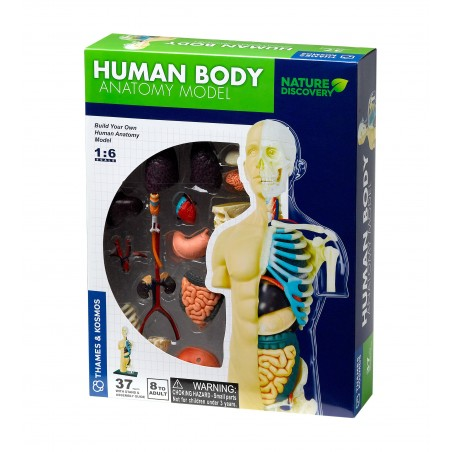 Thames & Kosmos - Human Body Anatomy Model
