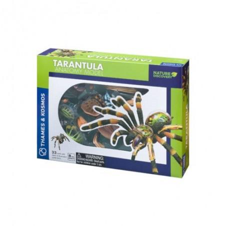 Thames and Kosmos - Tarantula anatomy model