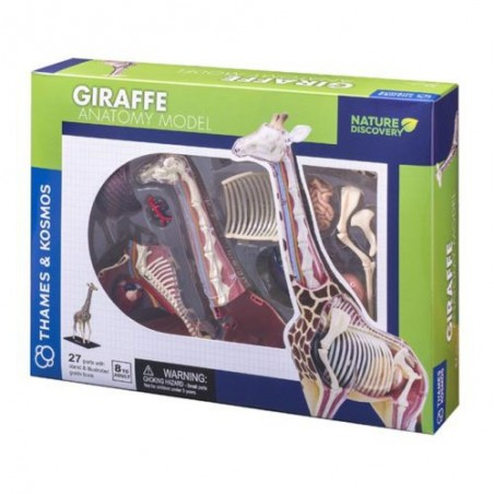 Thames & Kosmos - Giraffe Anatomy Model