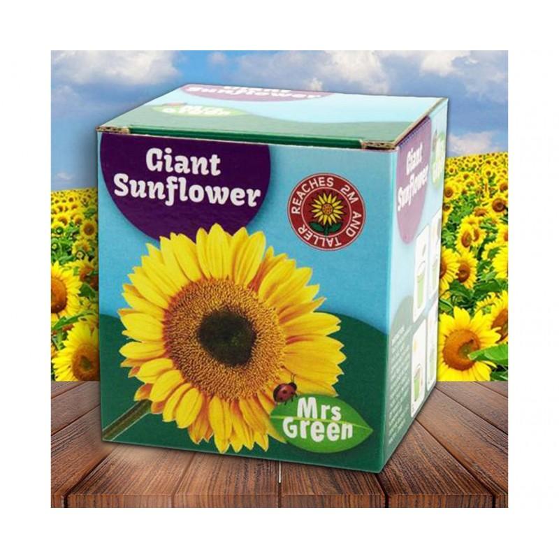 Mrs Green - Giant Sunflower